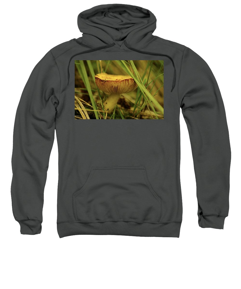 Mushroom Sweatshirt featuring the photograph Midway Mountain Morsel 2 by John Greaves