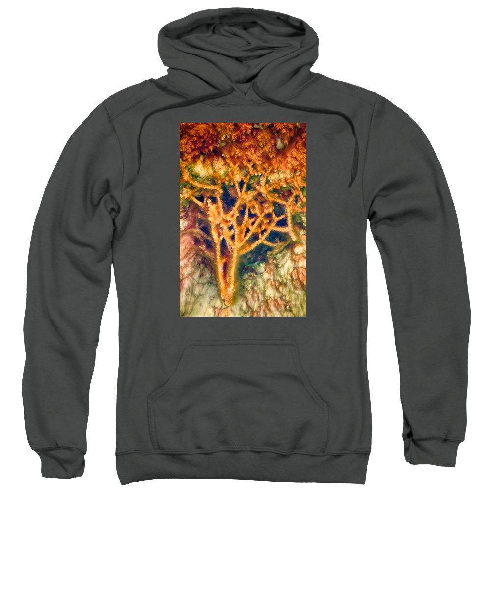 Hot Springs Sweatshirt featuring the photograph Mineral Branches Hot Springs by Scott Campbell