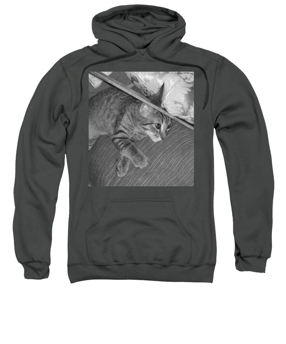 Kitten Sweatshirt featuring the photograph Model Kitten by Pharris Art