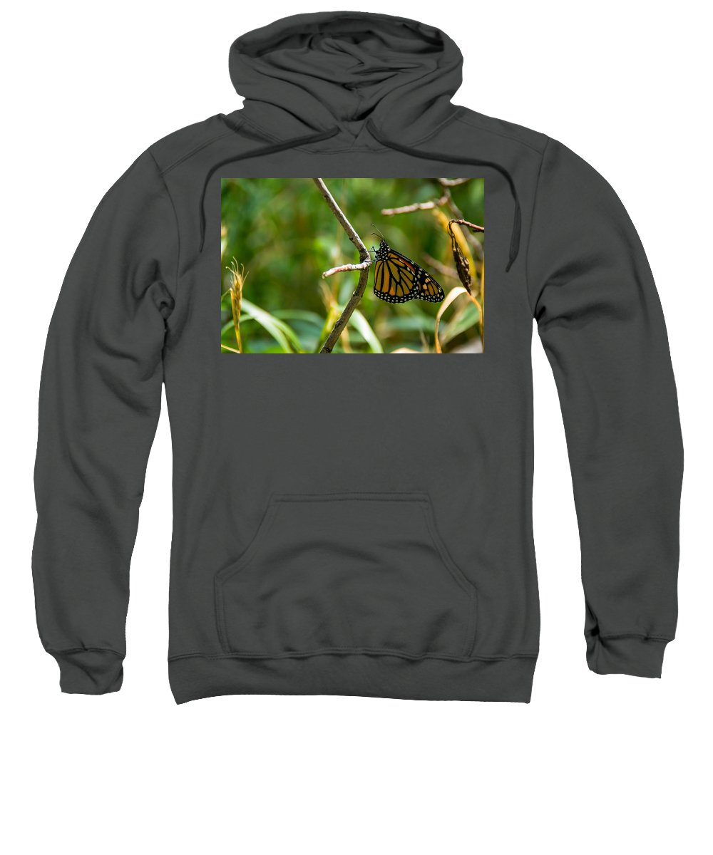 South Dakota Sweatshirt featuring the photograph Monarch by M Dale
