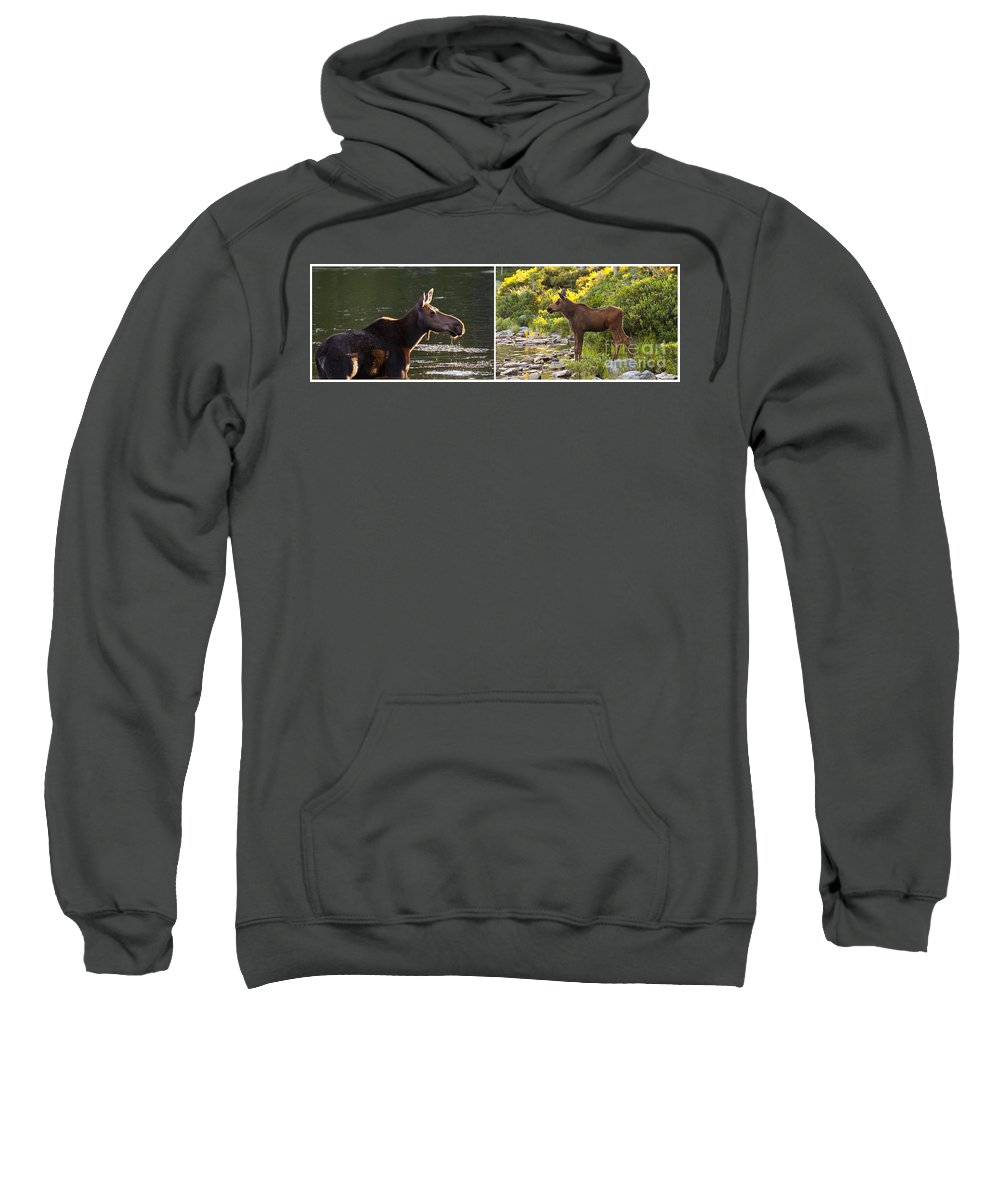 Maine Sweatshirt featuring the photograph Moose And Baby 5 by Glenn Gordon