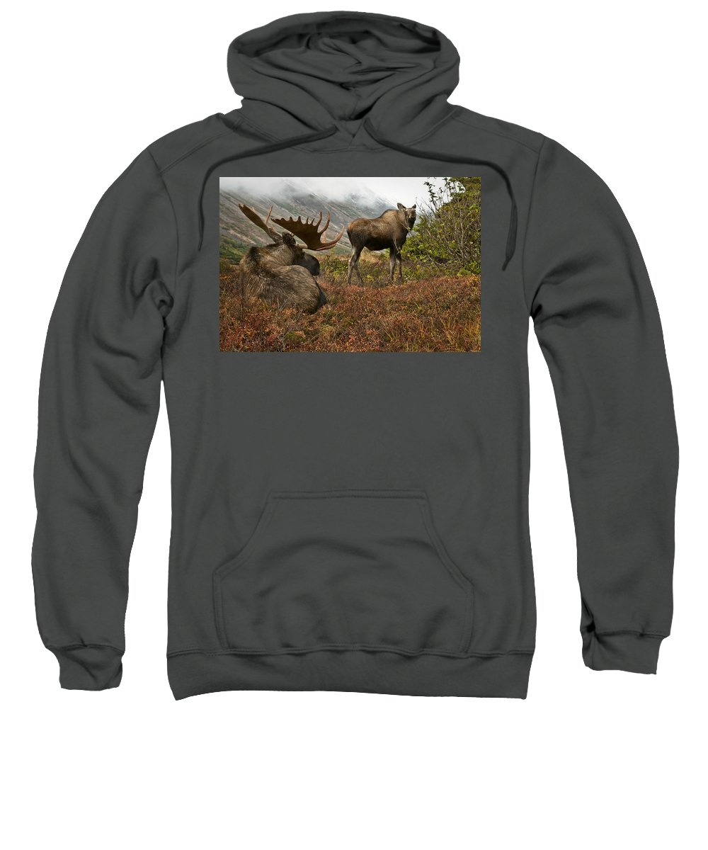 Moose Sweatshirt featuring the photograph Moose Pair On Anchorage Hillside by Eberhard Brunner