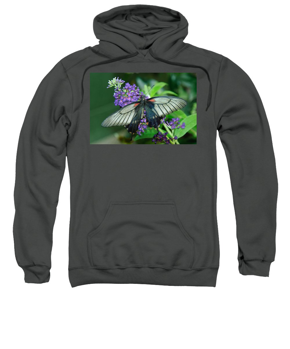 Butterfly Sweatshirt featuring the photograph Mormon Butterfly by Tam Ryan