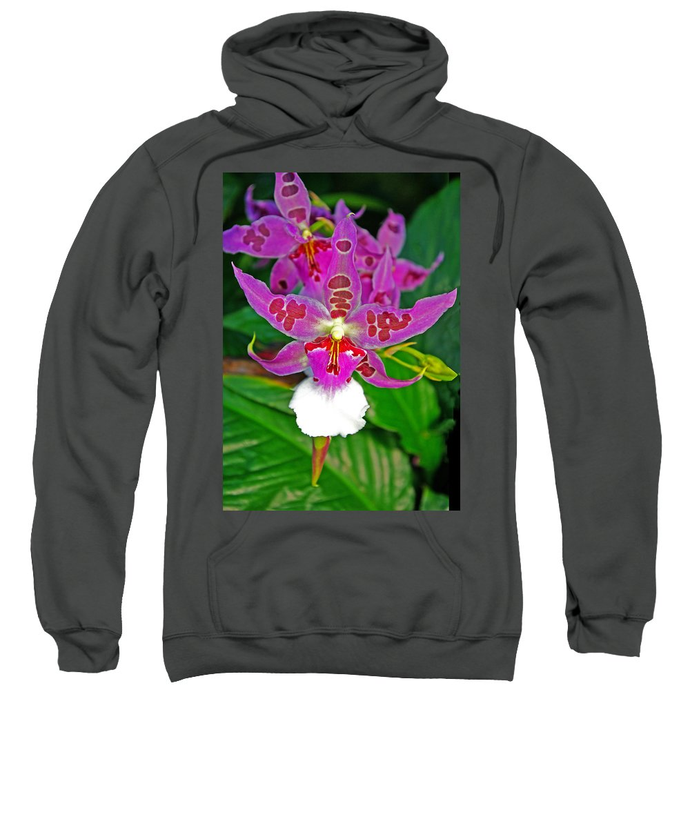 Orchids Sweatshirt featuring the photograph Morning Joy Orchid by Rich Walter