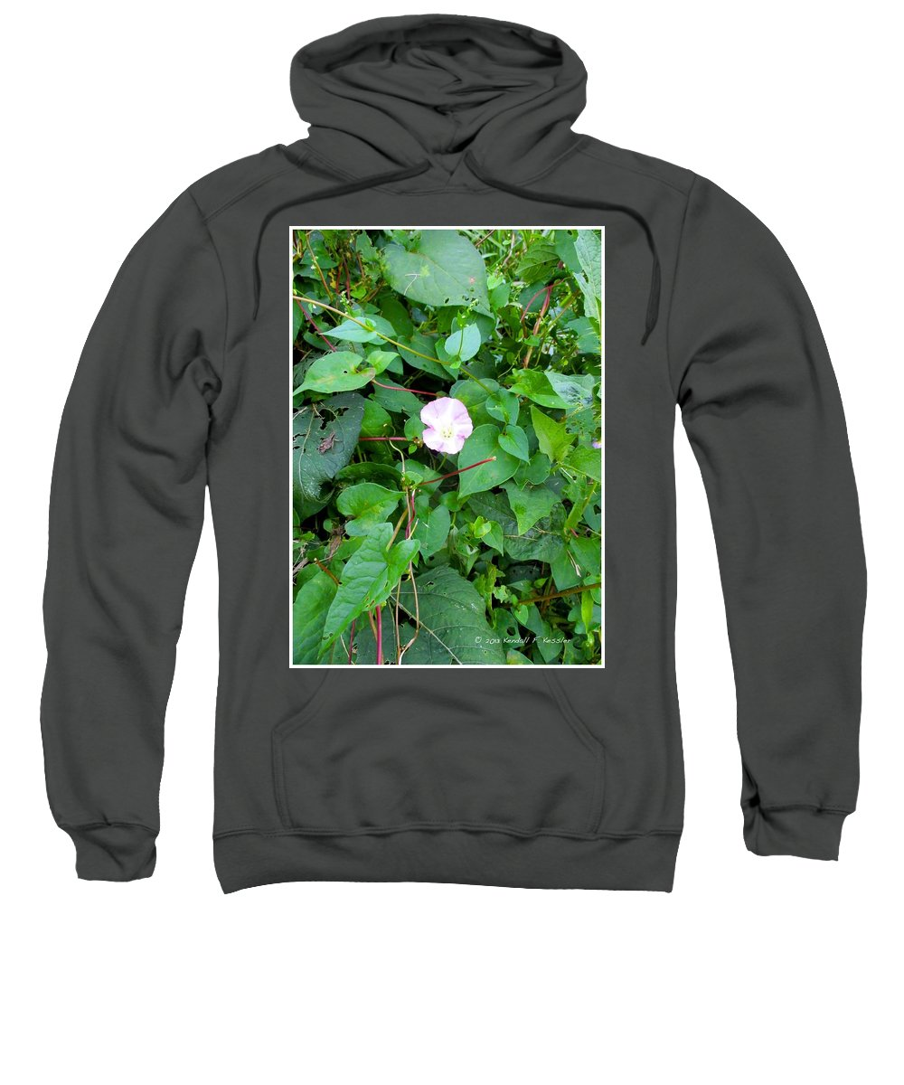 Flowers Sweatshirt featuring the photograph Morning Magenta Glow by Kendall Kessler