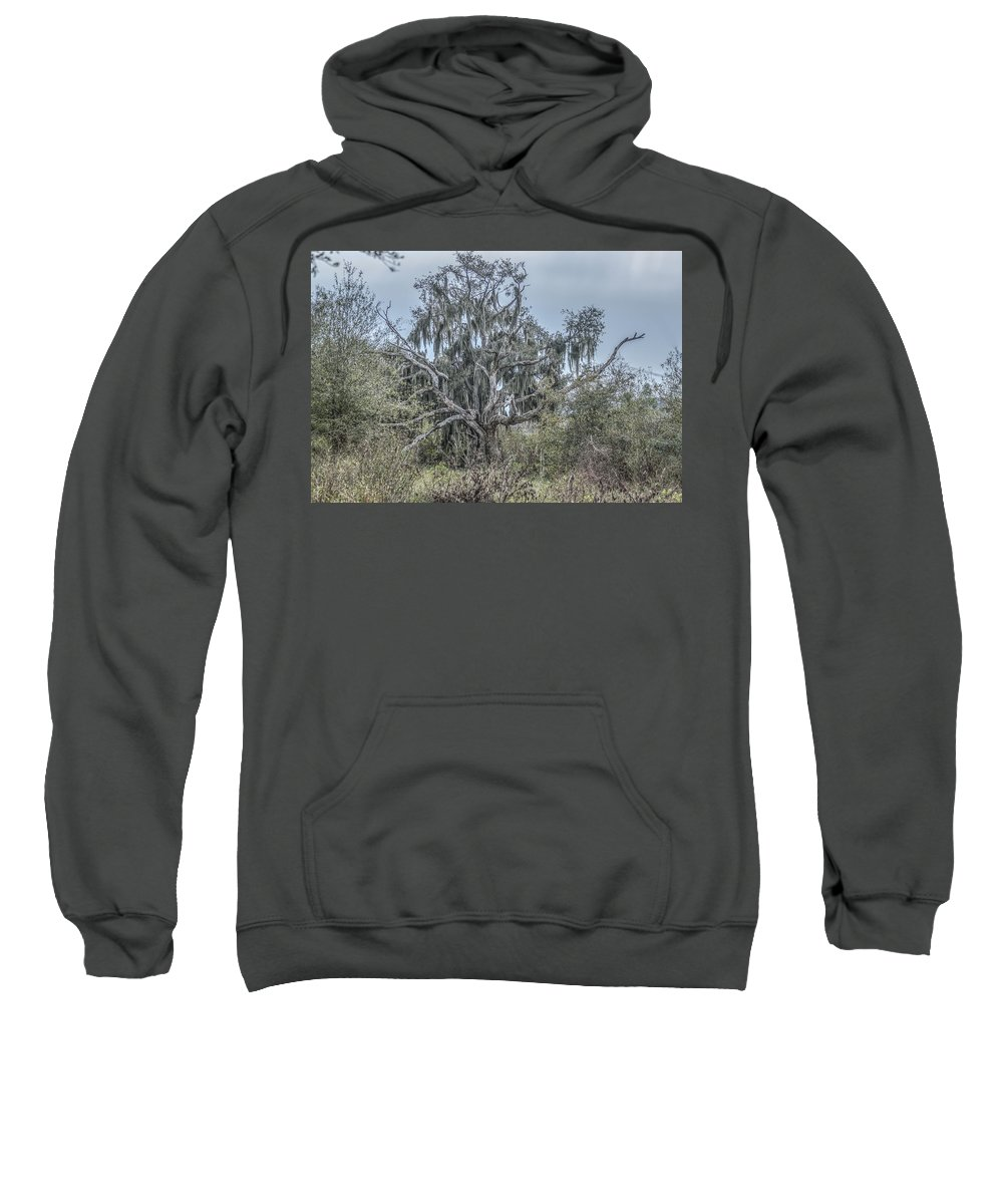 Tree Sweatshirt featuring the photograph Moss Covered Tree by Jane Luxton