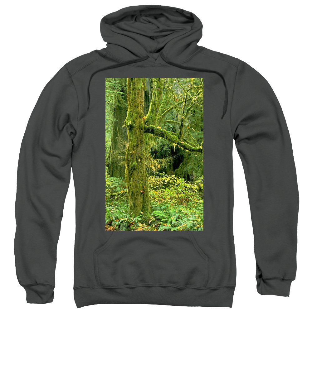 Big Leaf Maple Sweatshirt featuring the photograph Moss Draped Big Leaf Maple California by Dave Welling