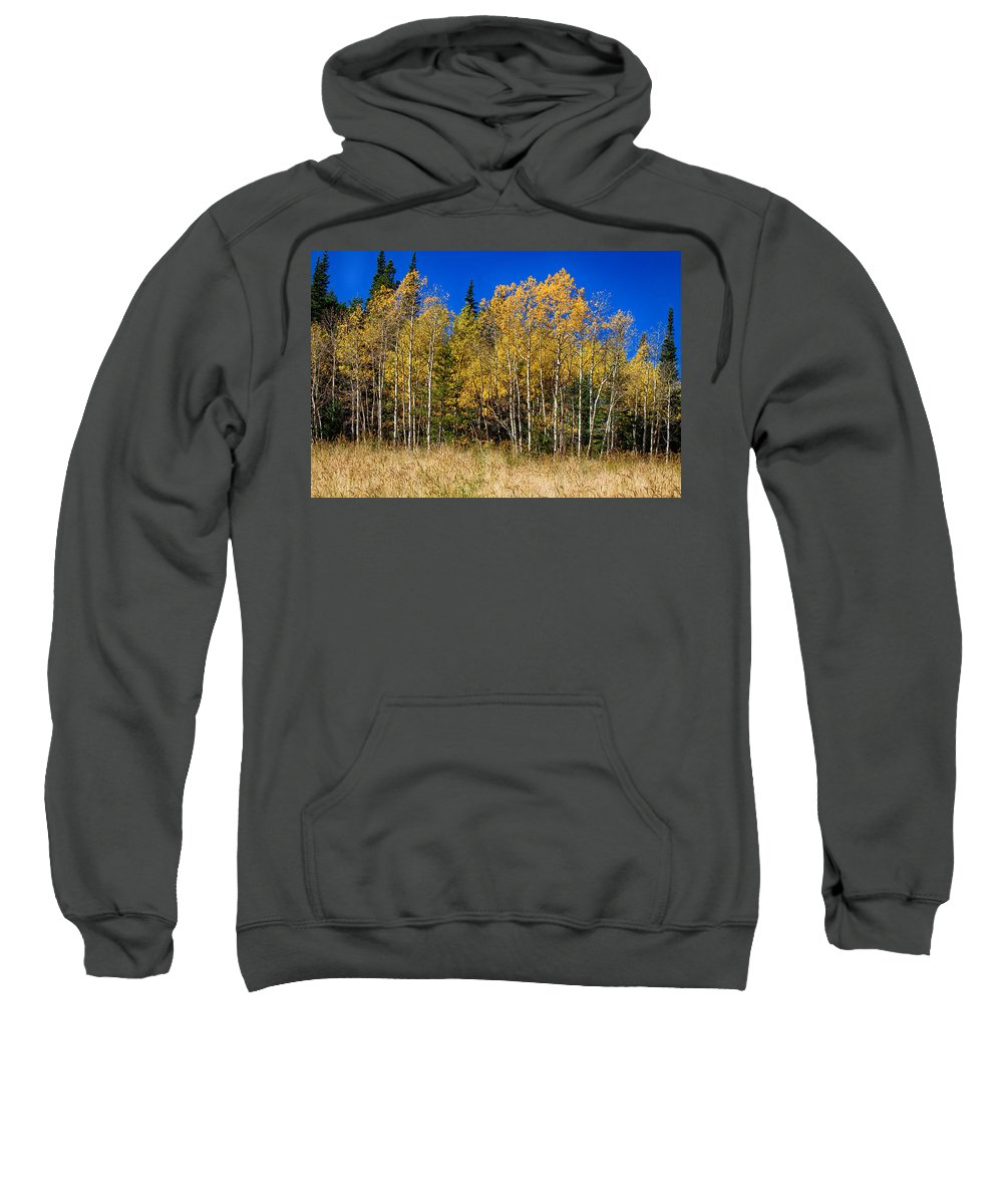 Autumn Sweatshirt featuring the photograph Mountain Grasses Autumn Aspens In Deep Blue Sky by James BO Insogna