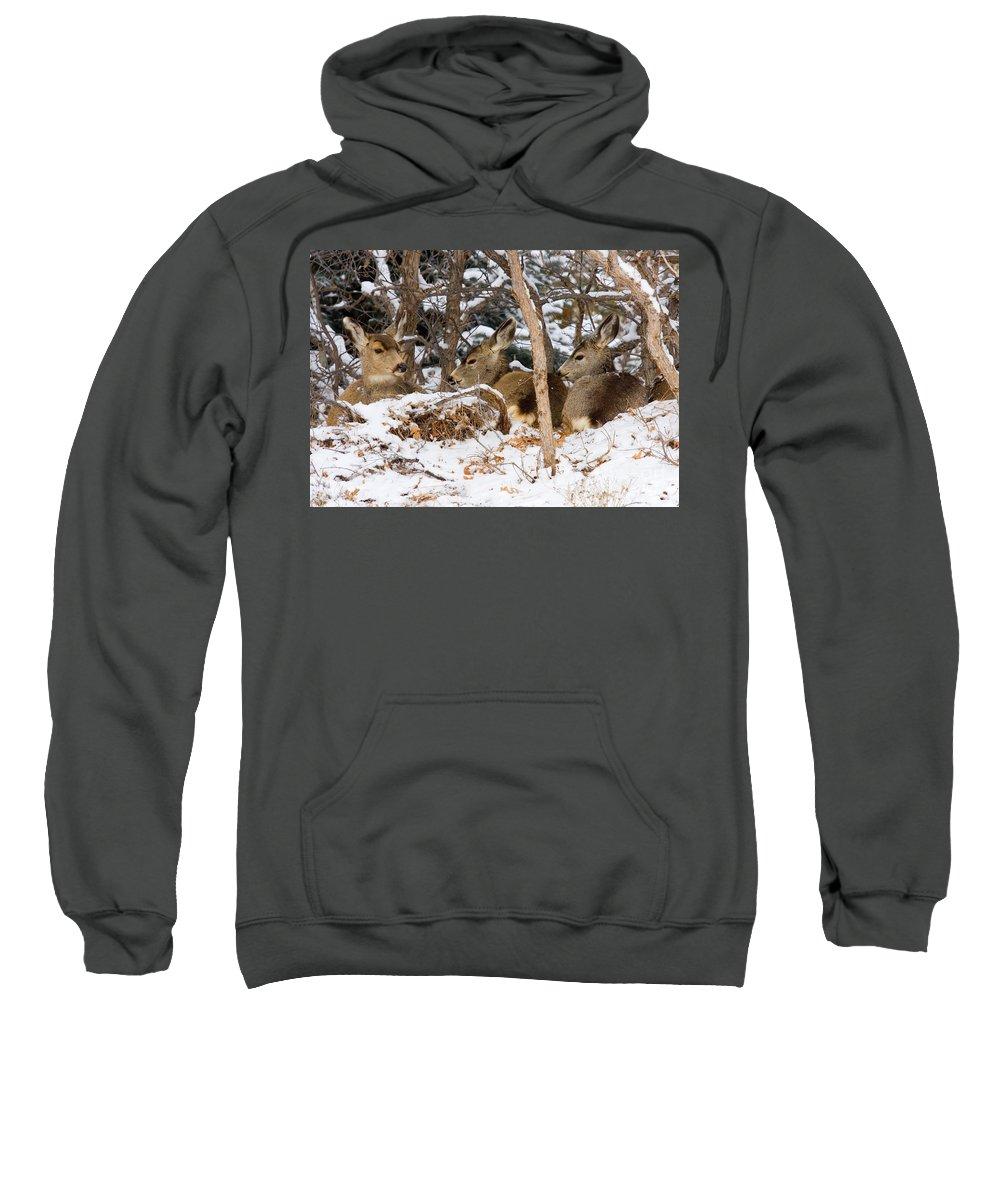 Mule Deer Sweatshirt featuring the photograph Mule Deer In Snow by Steve Krull
