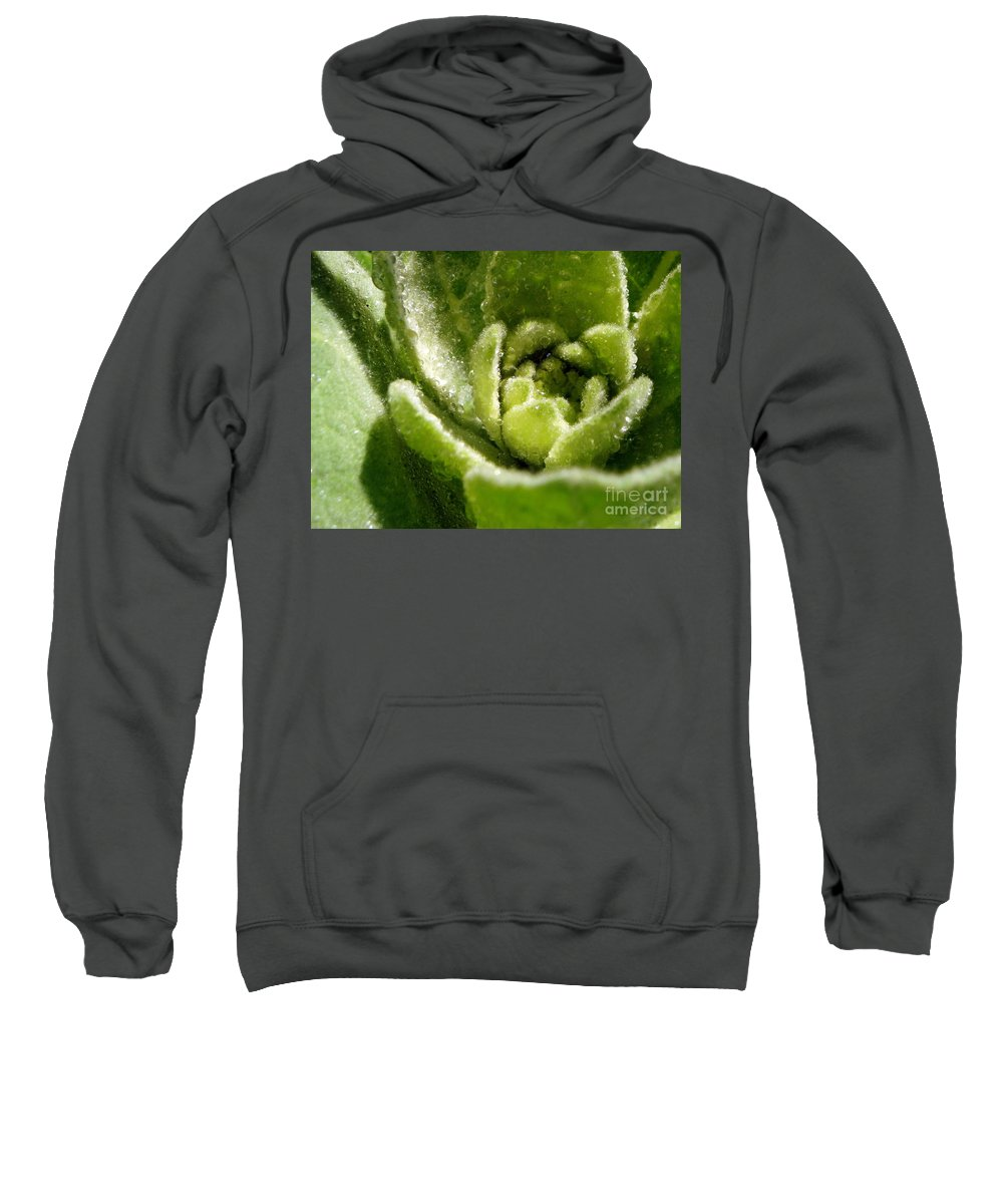 Mullein Sweatshirt featuring the photograph Mullein Dew by Renee Croushore