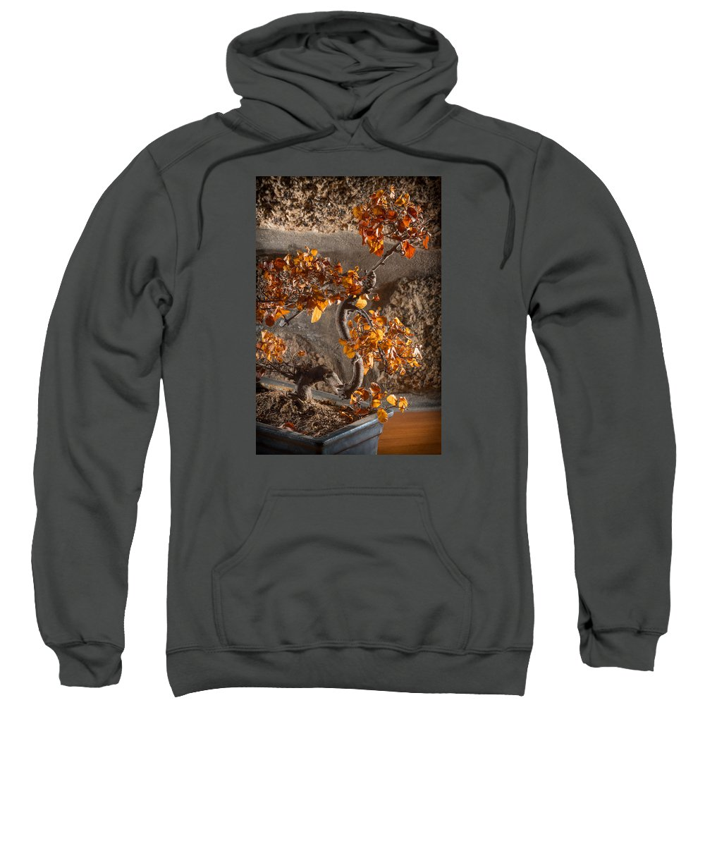Bonsai Sweatshirt featuring the photograph Mummified Bonsai by Ernesto Santos