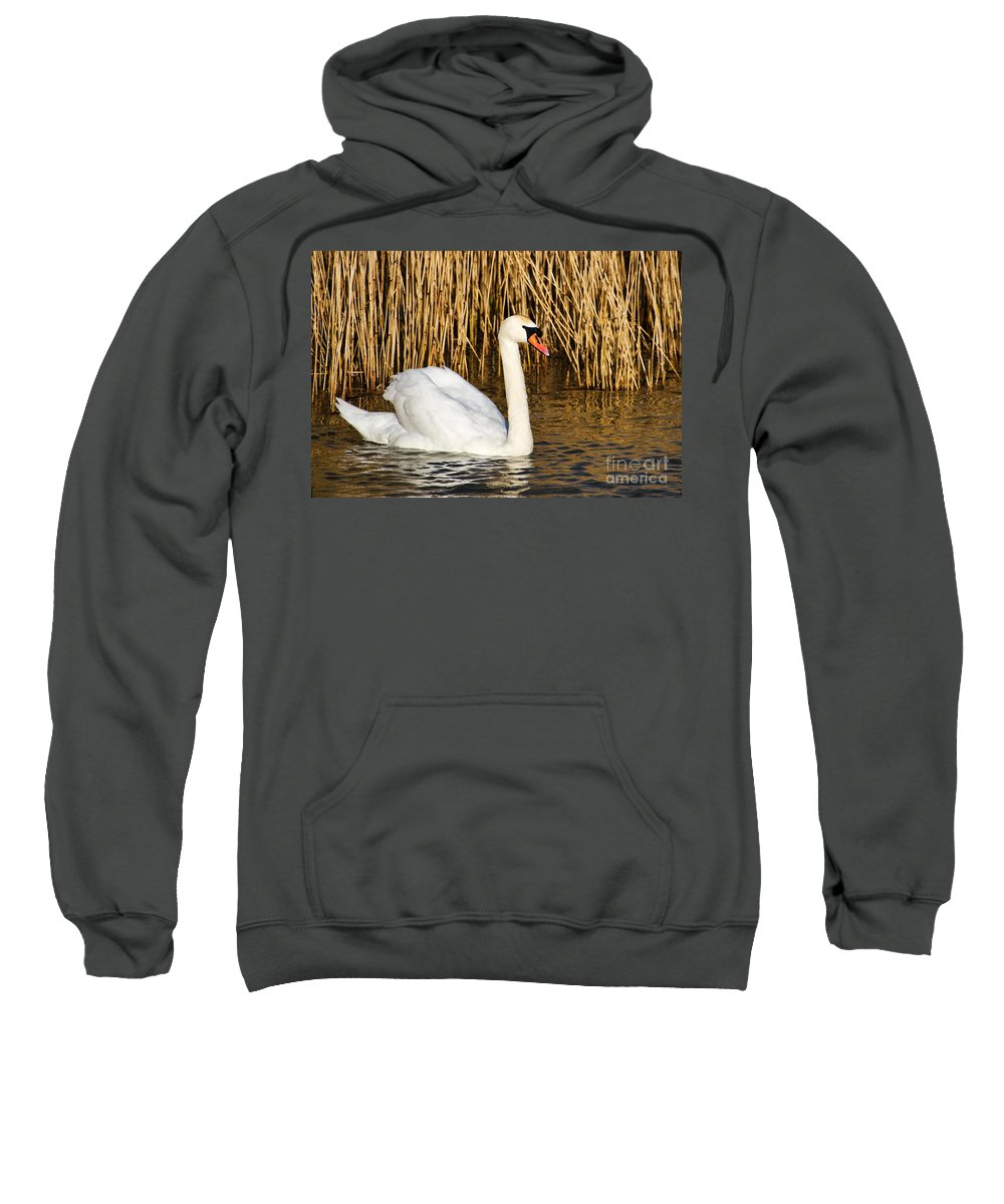 Swan Sweatshirt featuring the photograph Mute Swan By Reed Beds by Susie Peek