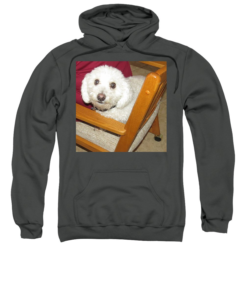 Pet Sweatshirt featuring the photograph My Name Is Sport by Carl Deaville