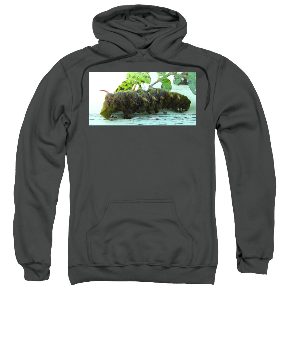 Dead Caterpillar Parasitic Wasp Larve Images Parasitic Wasp Larve Photos Parasitic Wasp Larve Prints Natural Causes Cycle Of Life Food Chain Entomology Biodiversity Preservation Nature Forest Ecology Insect Ecosystem Sweatshirt featuring the photograph Natural Causes by Joshua Bales