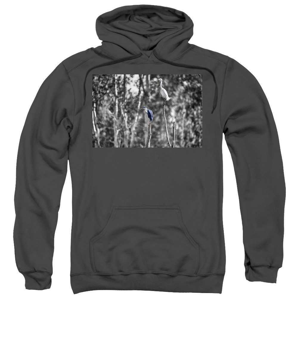 Pied Heron Sweatshirt featuring the photograph Neighbors by Douglas Barnard