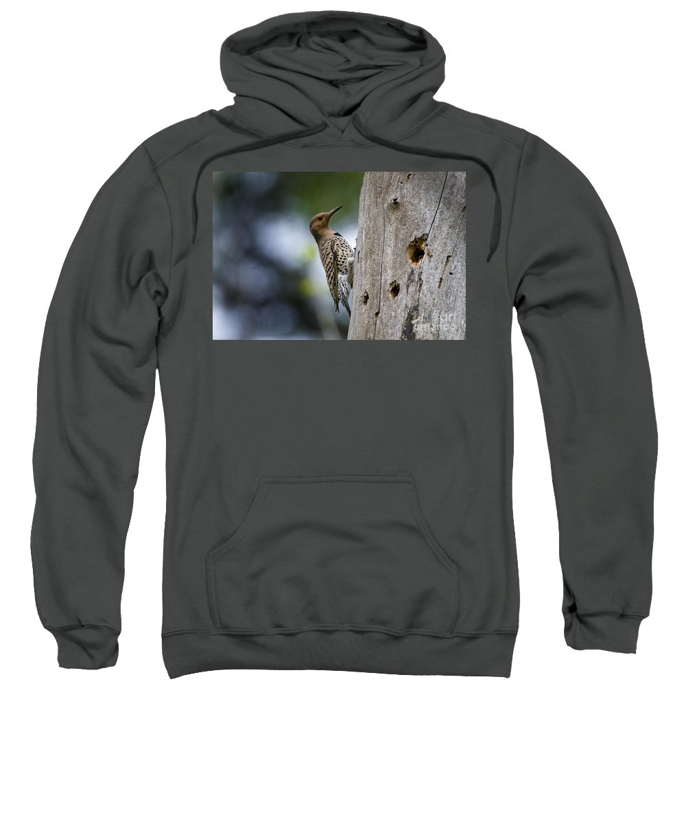 Northern Flicker Sweatshirt featuring the photograph Northern Flicker Pictures 35 by World Wildlife Photography