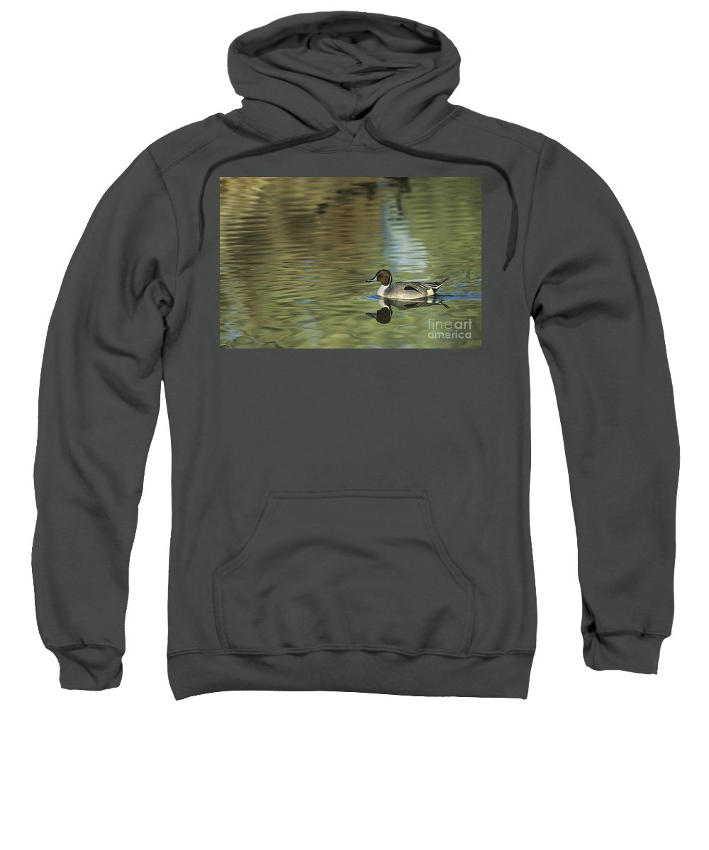 North America Sweatshirt featuring the photograph Northern Pintail In A Quiet Pond California Wildlife by Dave Welling