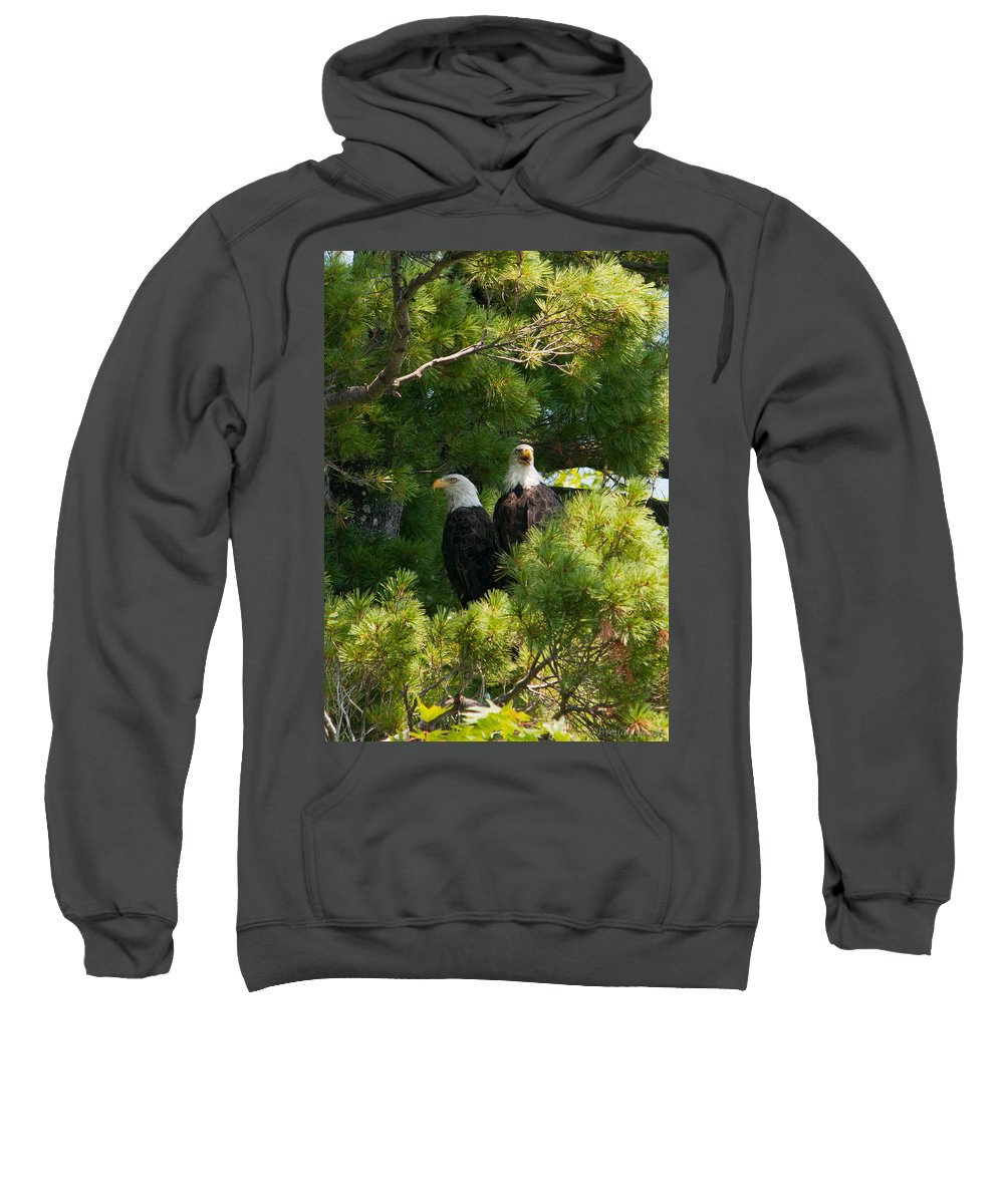 Bald Eagle Sweatshirt featuring the photograph Not Listening by Brenda Jacobs
