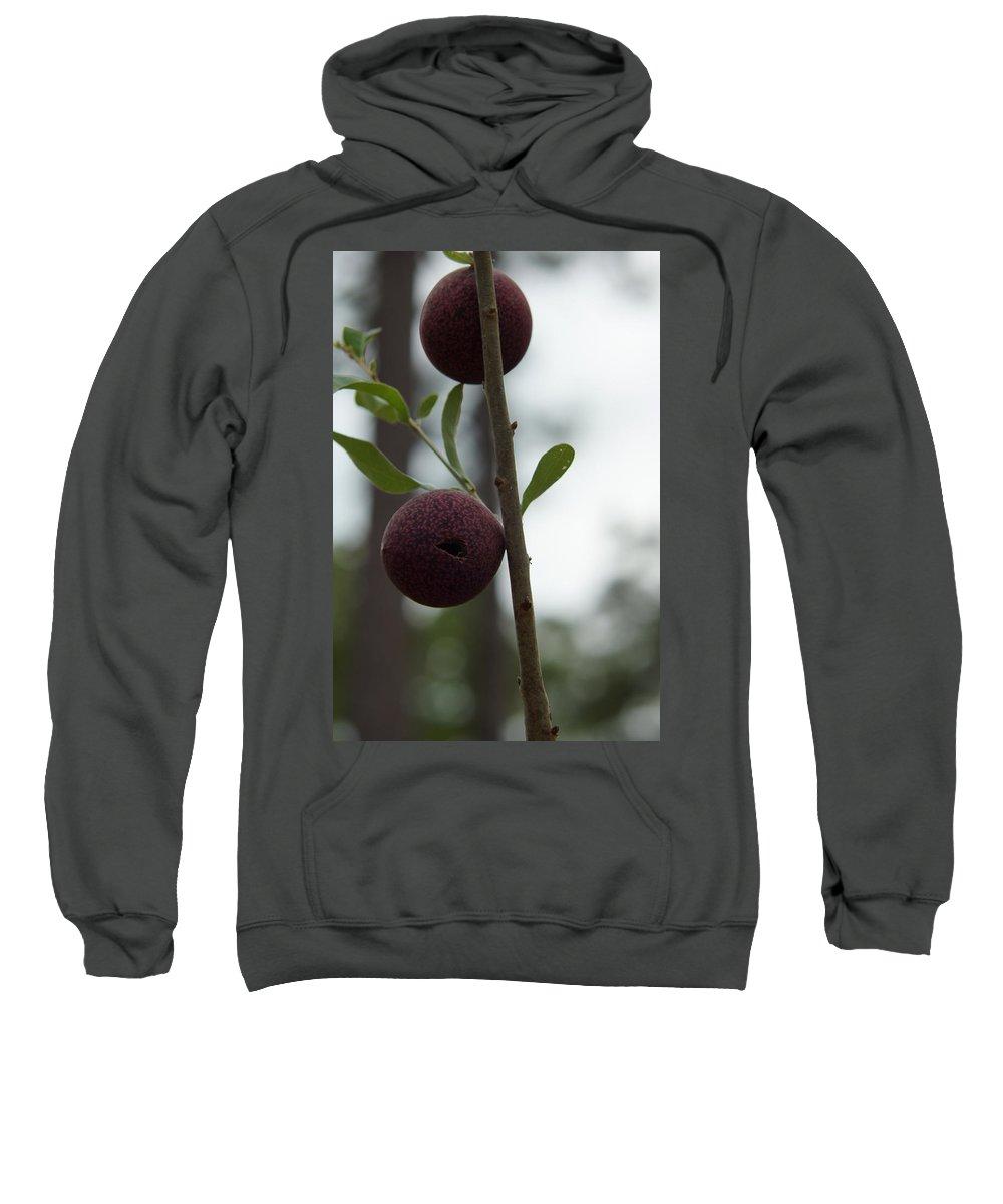 Oak Gall Sweatshirt featuring the photograph Oak Galls by Kim Pate