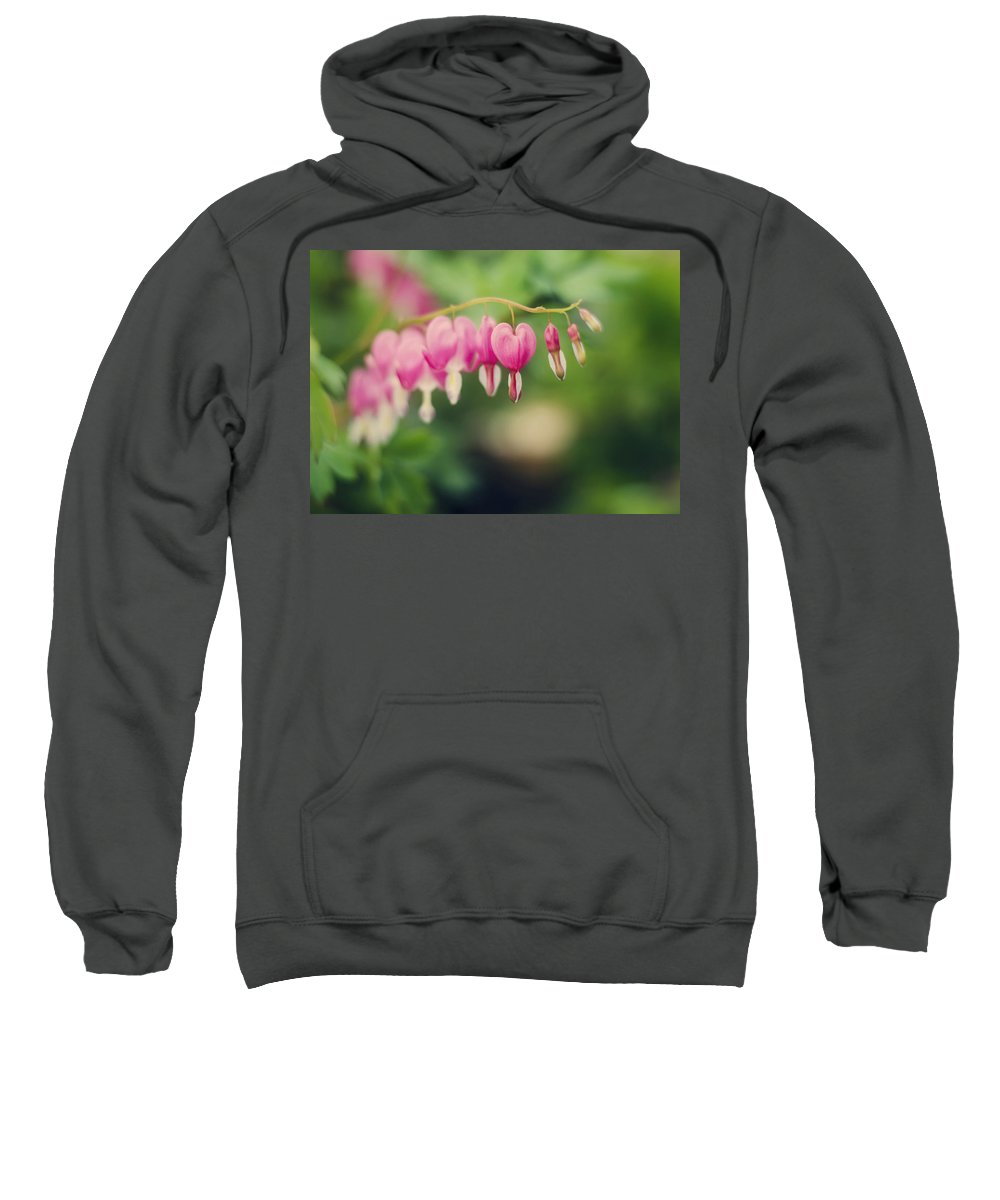 Old Fashioned Sweatshirt featuring the photograph Old Fashioned Bleeding Hearts by Heather Applegate