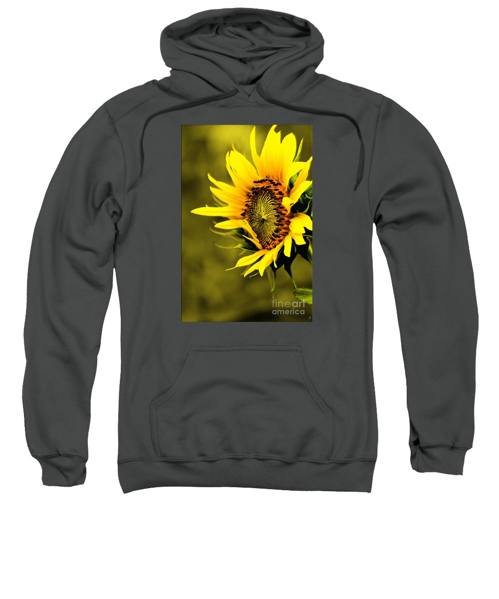 Plant Sweatshirt featuring the photograph Old Time Sunflower by Sandra Clark