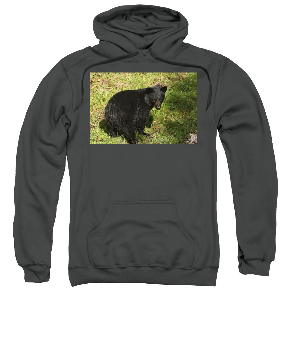 Quadruplets Sweatshirt featuring the photograph One Of The Quads by Teresa McGill