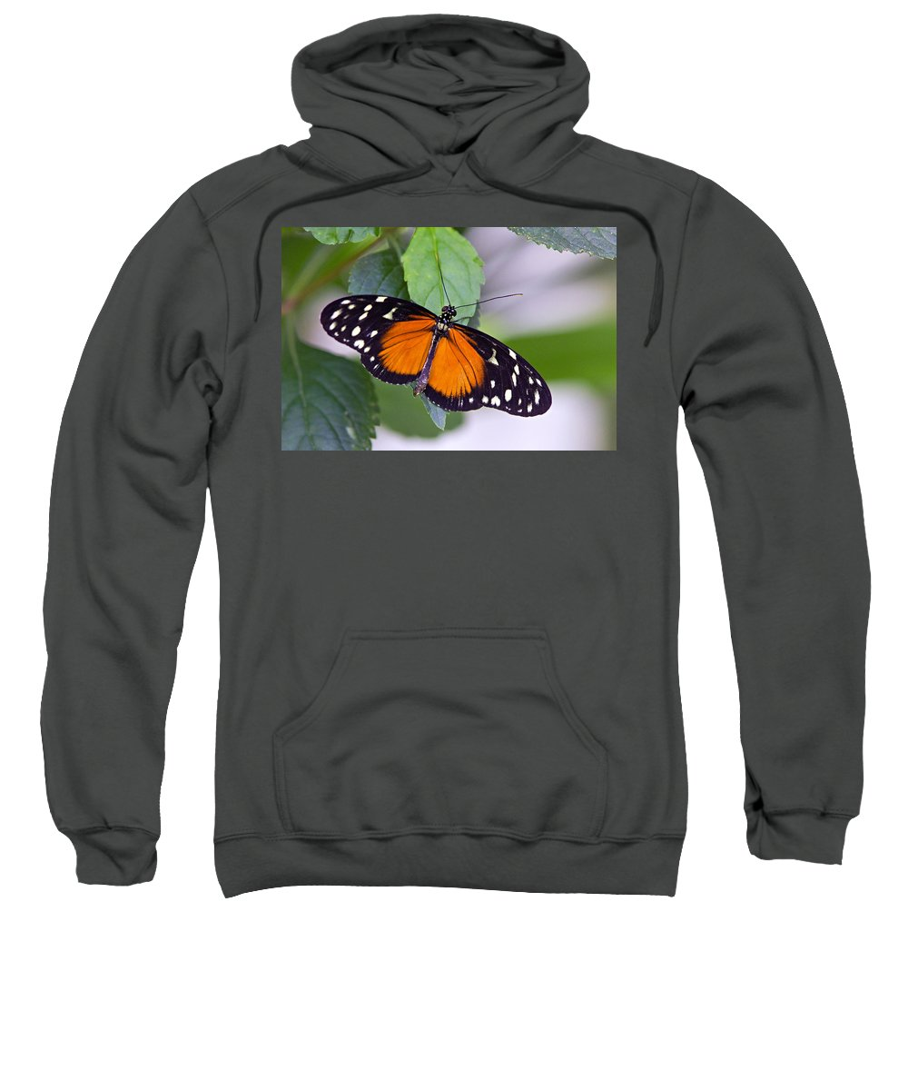 Butterfly Sweatshirt featuring the photograph Orange And Black Butterfly by Vanessa Valdes