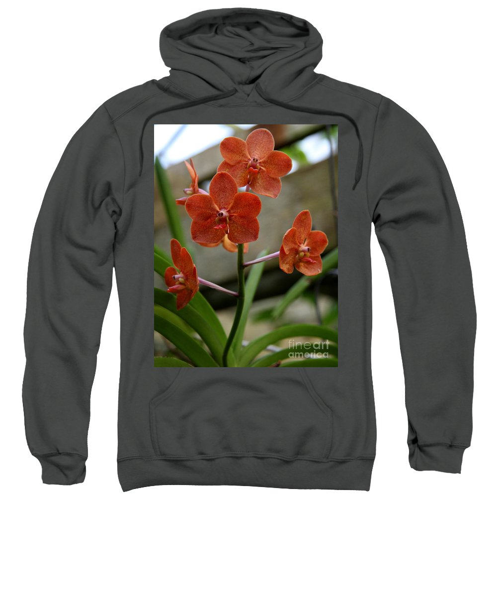 Orange Orchid Sweatshirt featuring the photograph Orange Colored Orchid by Christiane Schulze Art And Photography