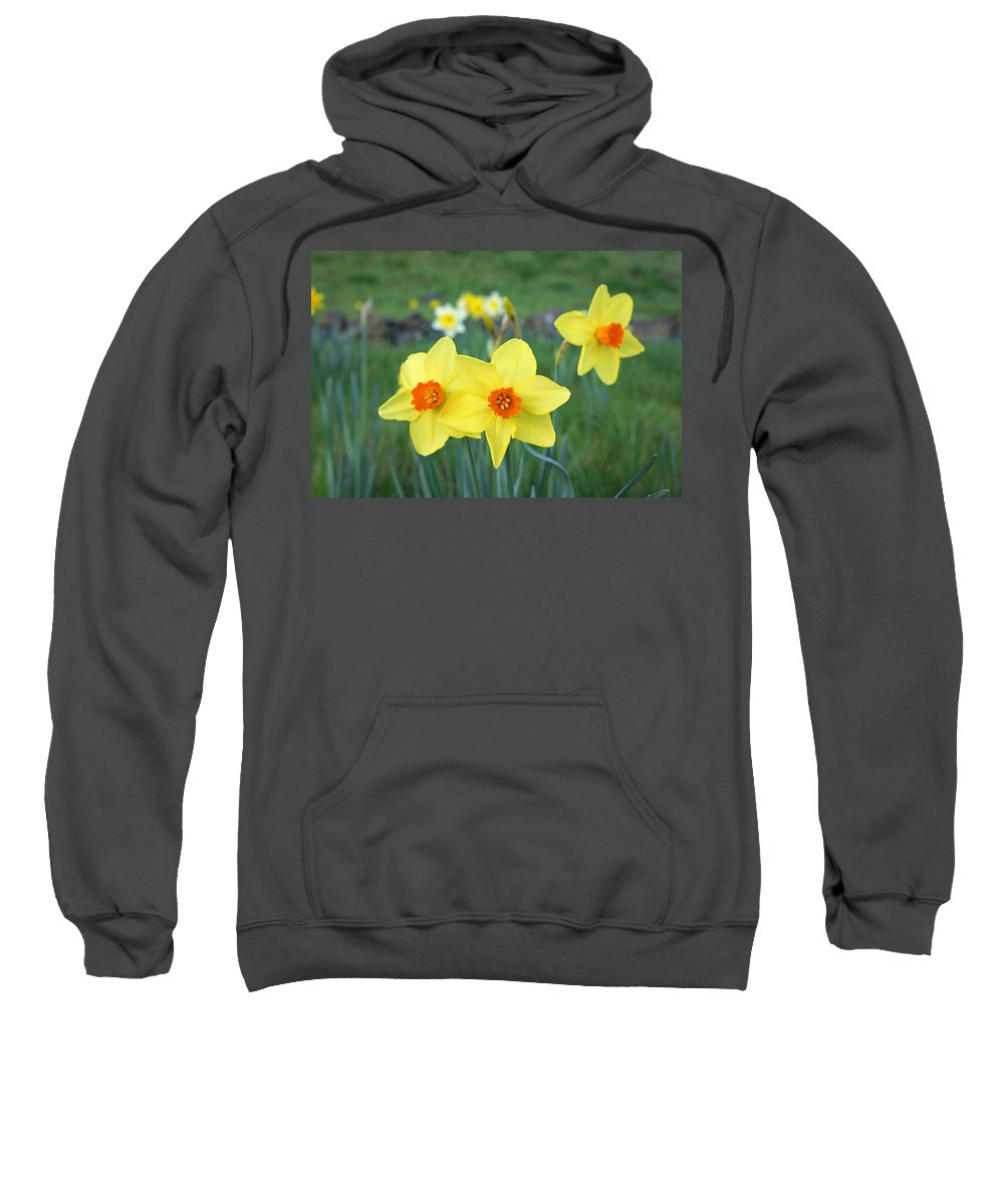 Orange Sweatshirt featuring the photograph Orange Daffodils Flowers Spring Garden by Baslee Troutman
