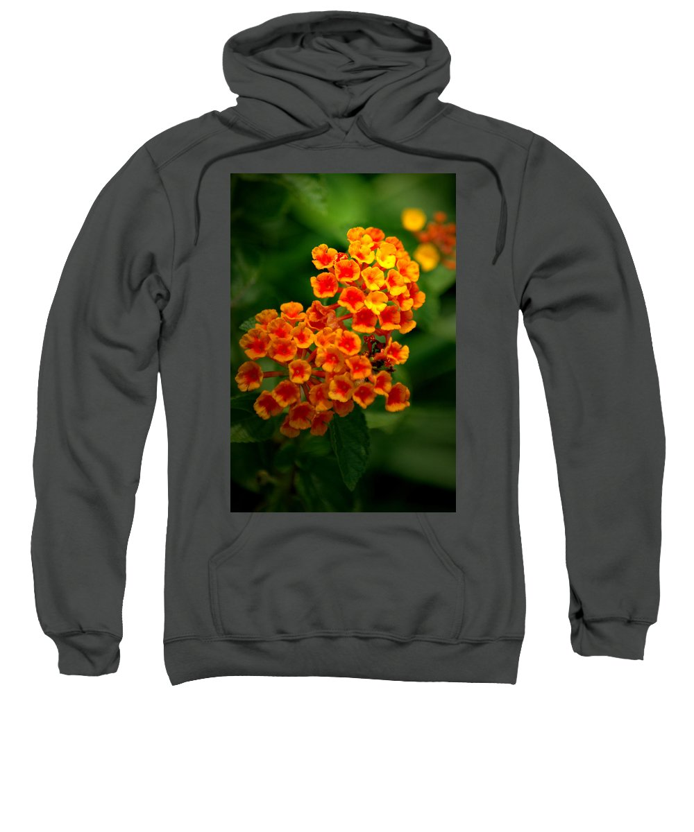 Flower Sweatshirt featuring the photograph Orchestra by David Weeks