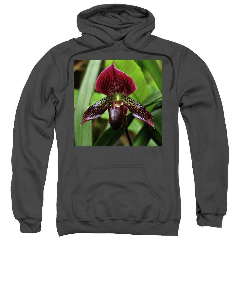 Orchid Sweatshirt featuring the photograph Orchid by Sandy Keeton