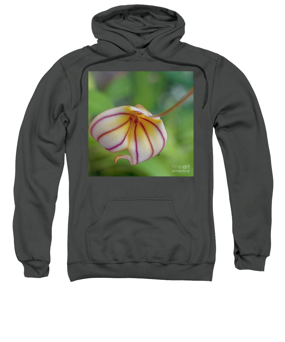 Orchid Sweatshirt featuring the photograph Orchids - Masdevallia Hybrid by Heiko Koehrer-Wagner