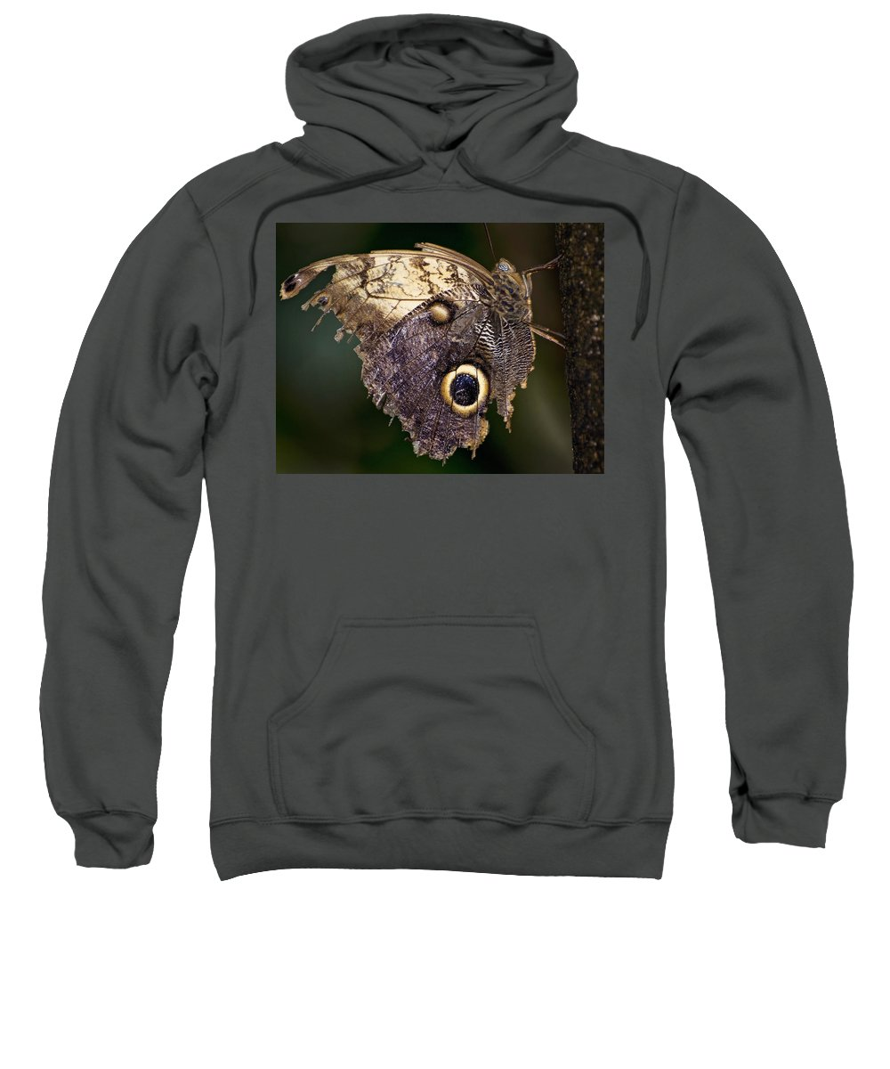 Butterfly Sweatshirt featuring the photograph Owl Butterfly by Heather Applegate