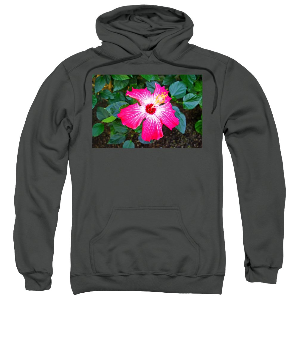 Hibiscus Sweatshirt featuring the photograph 'painted Lady' Hibiscus by Rich Walter