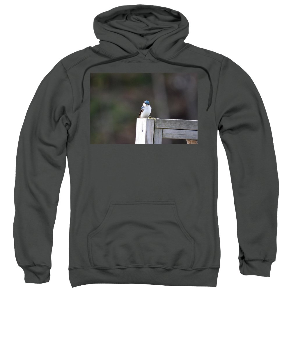 Tree Swallow Sweatshirt featuring the photograph Pensive Tree Swallow by Thomas Phillips