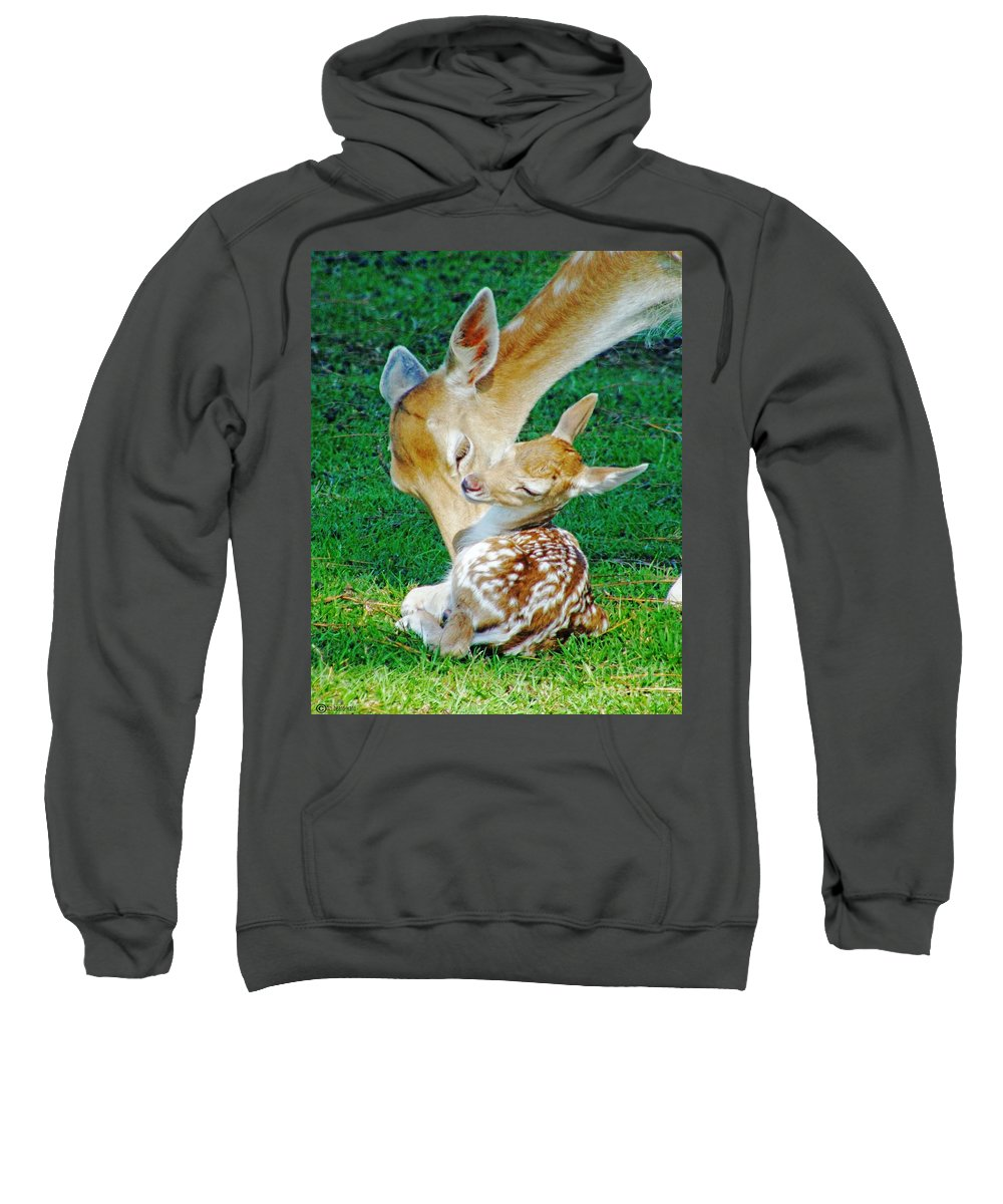 Deer Sweatshirt featuring the photograph Pere David Deer And Fawn by Lizi Beard-Ward