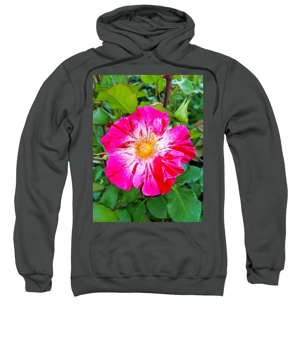 Pink And Red Striped Rose Sweatshirt featuring the photograph Pink And Red Striped Rose by Cynthia Woods