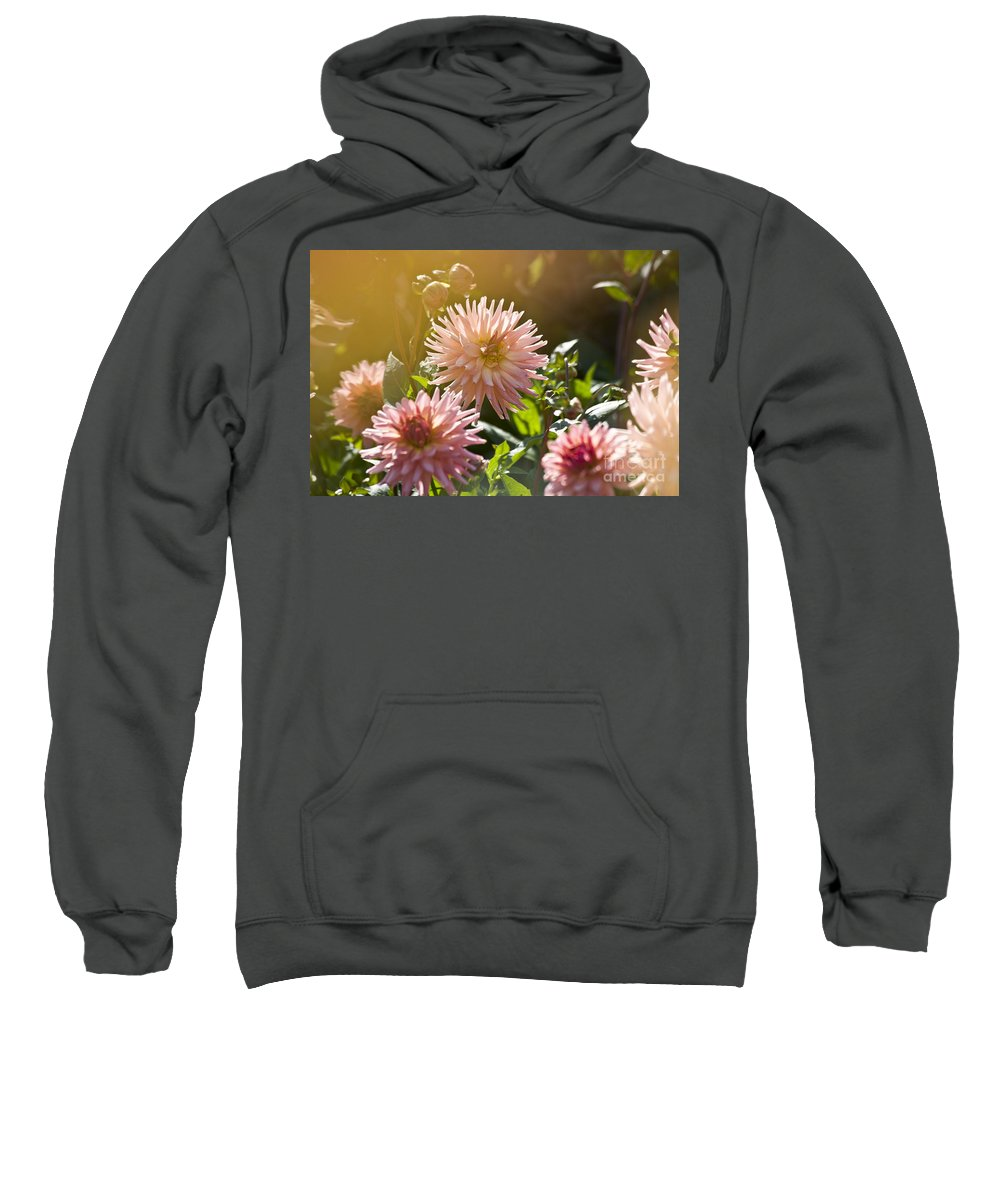 Heiko Sweatshirt featuring the photograph Pink Dahlia Garden by Heiko Koehrer-Wagner