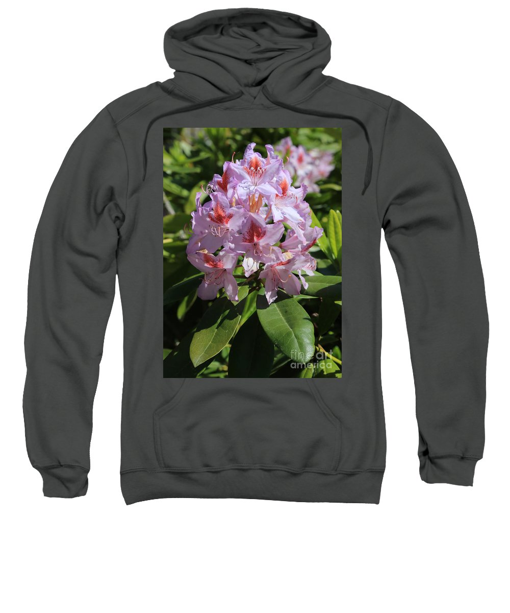 Rhododendron Sweatshirt featuring the photograph Pink Rhododendron In Sunshine by Carol Groenen