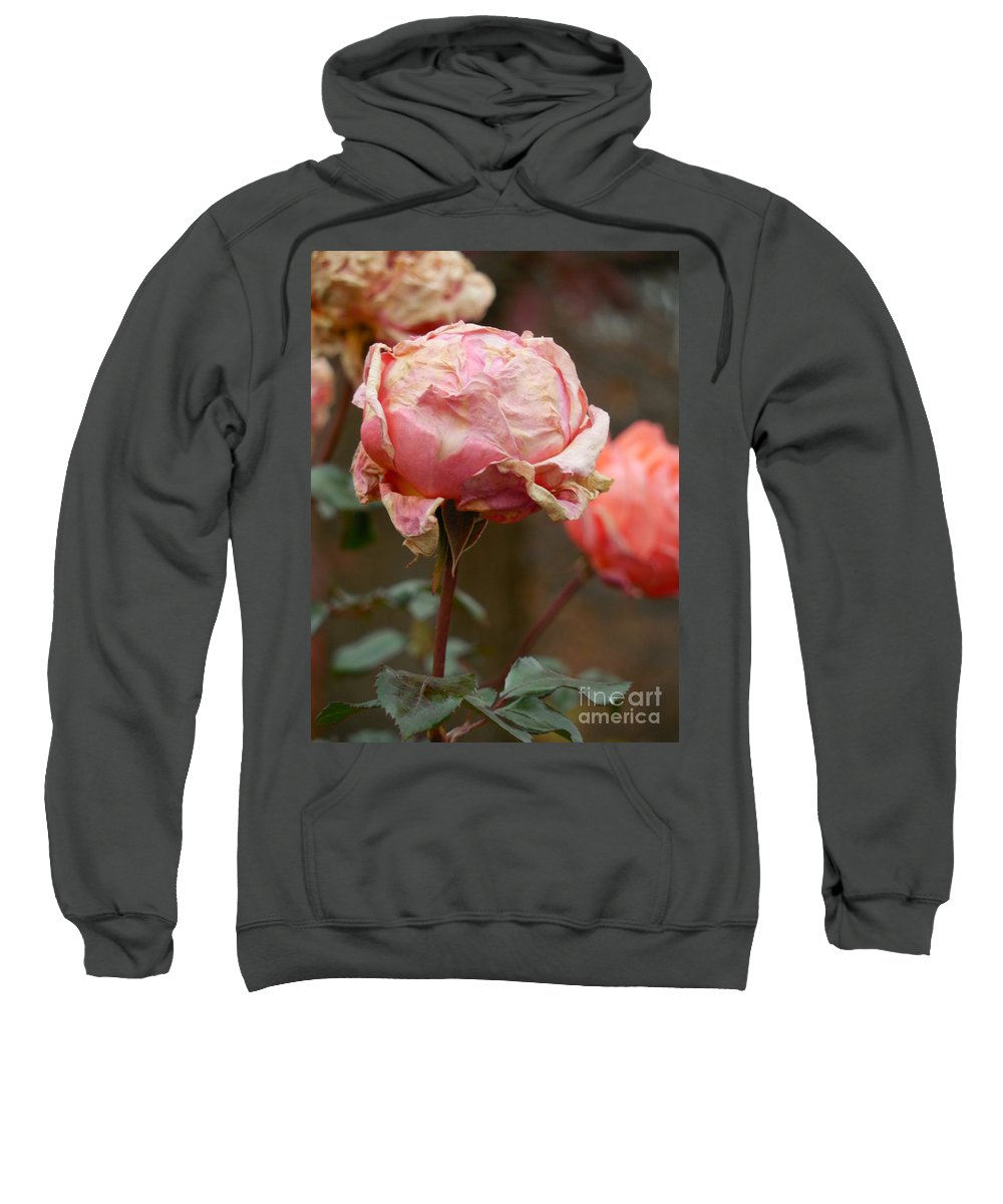 Floral Sweatshirt featuring the photograph Pink Roses In The First Snow by Rowena Throckmorton