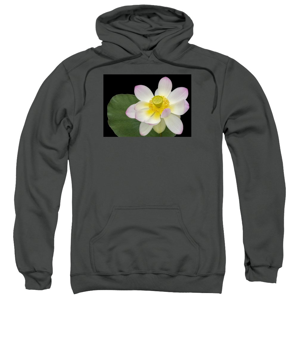 Sacred Lotus Sweatshirt featuring the photograph Pink Sacred Lotus Flower by Susan Candelario