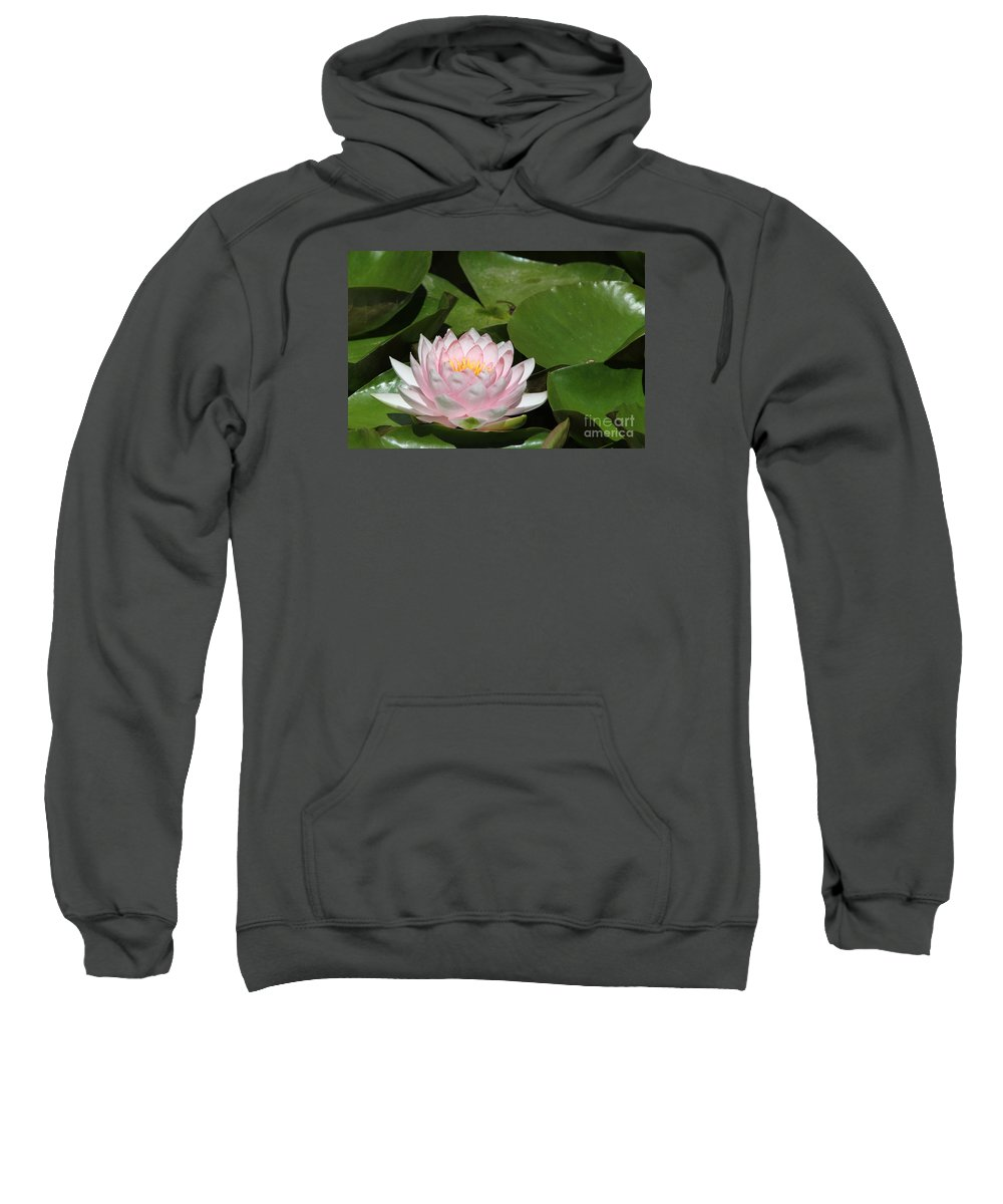 Water Lily Sweatshirt featuring the photograph Pink Water Lily by Judy Whitton