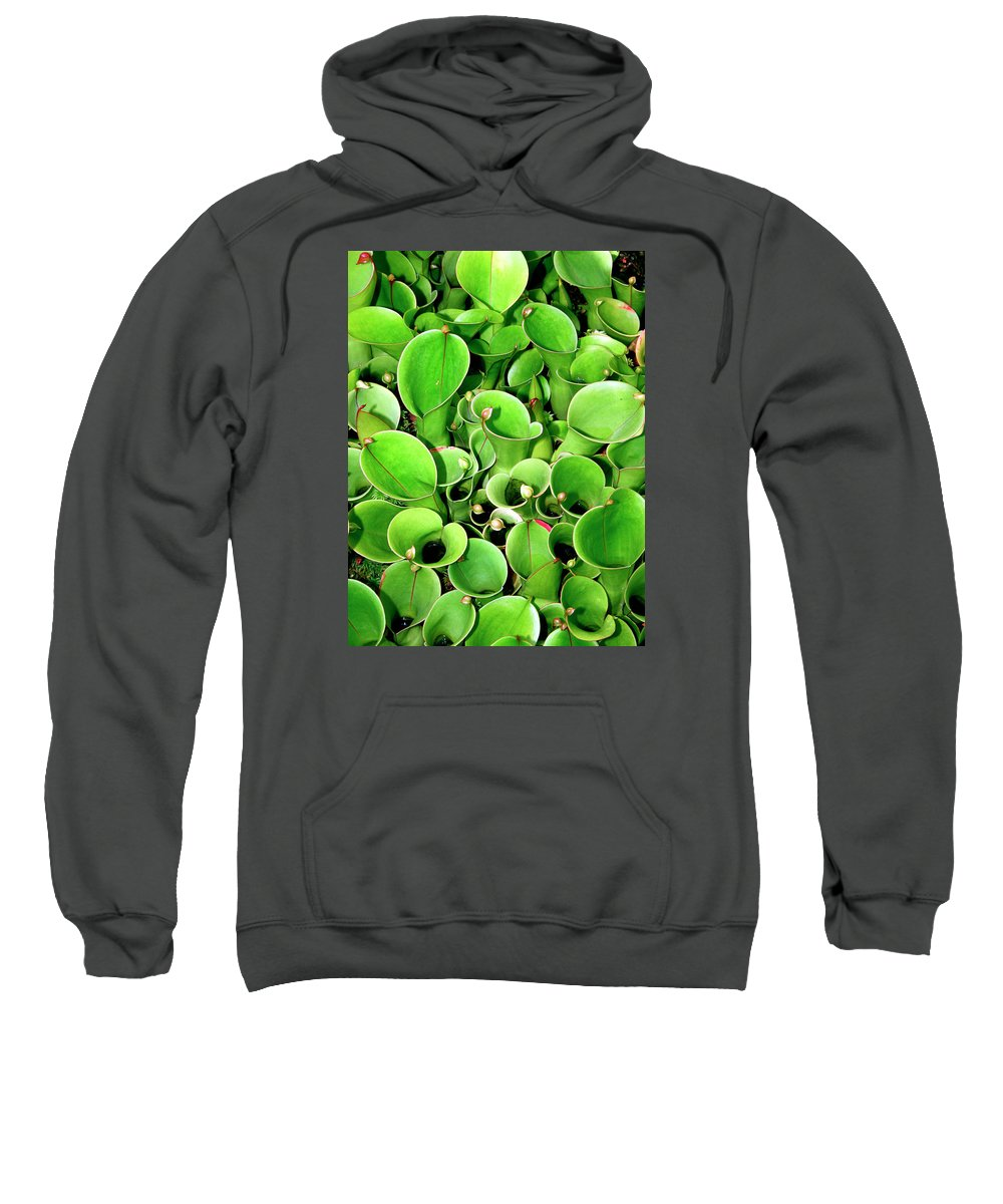 Plant Sweatshirt featuring the photograph Pitcher Plants Palm Springs by William Dey