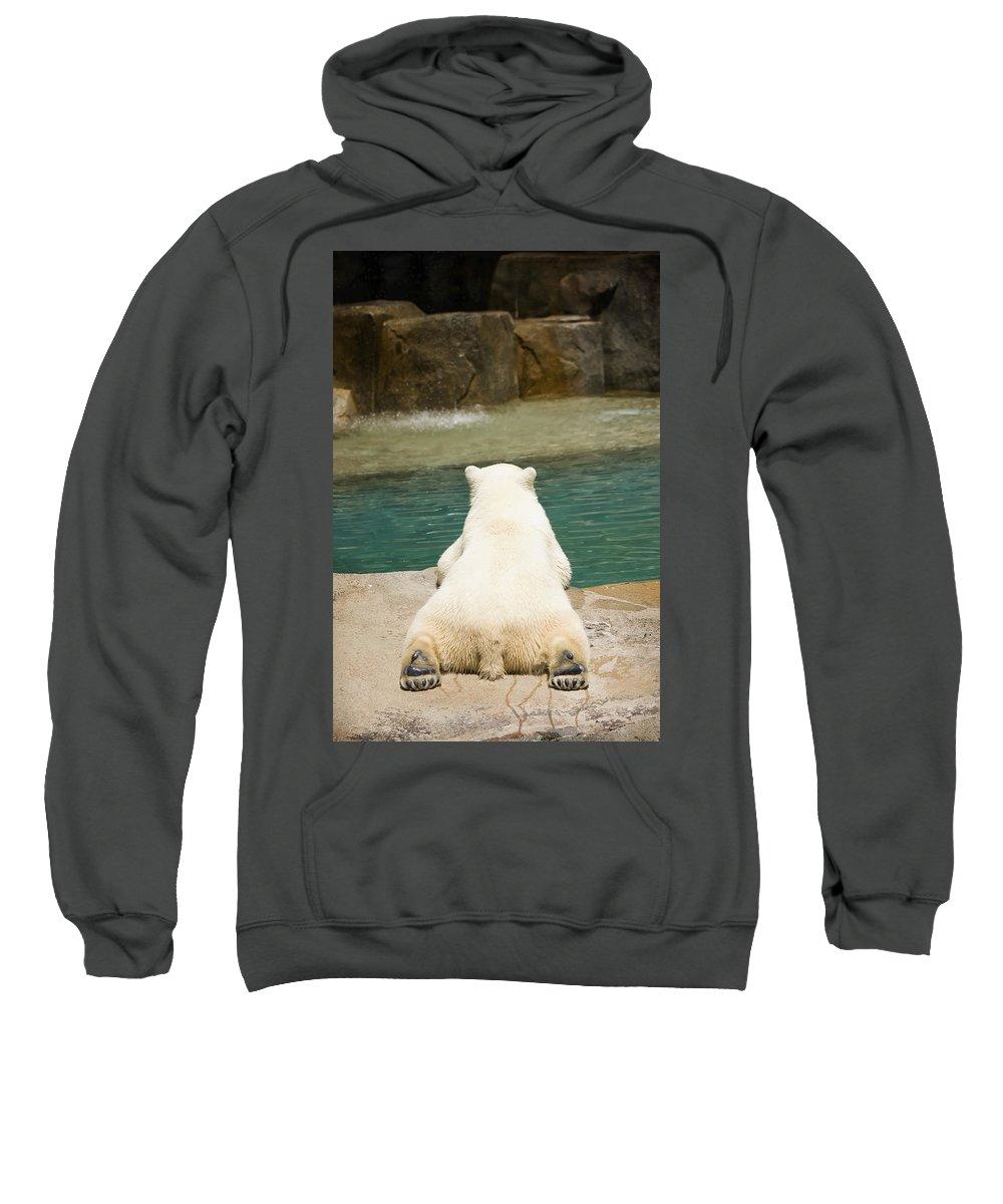 3scape Photos Sweatshirt featuring the photograph Playful Polar Bear by Adam Romanowicz