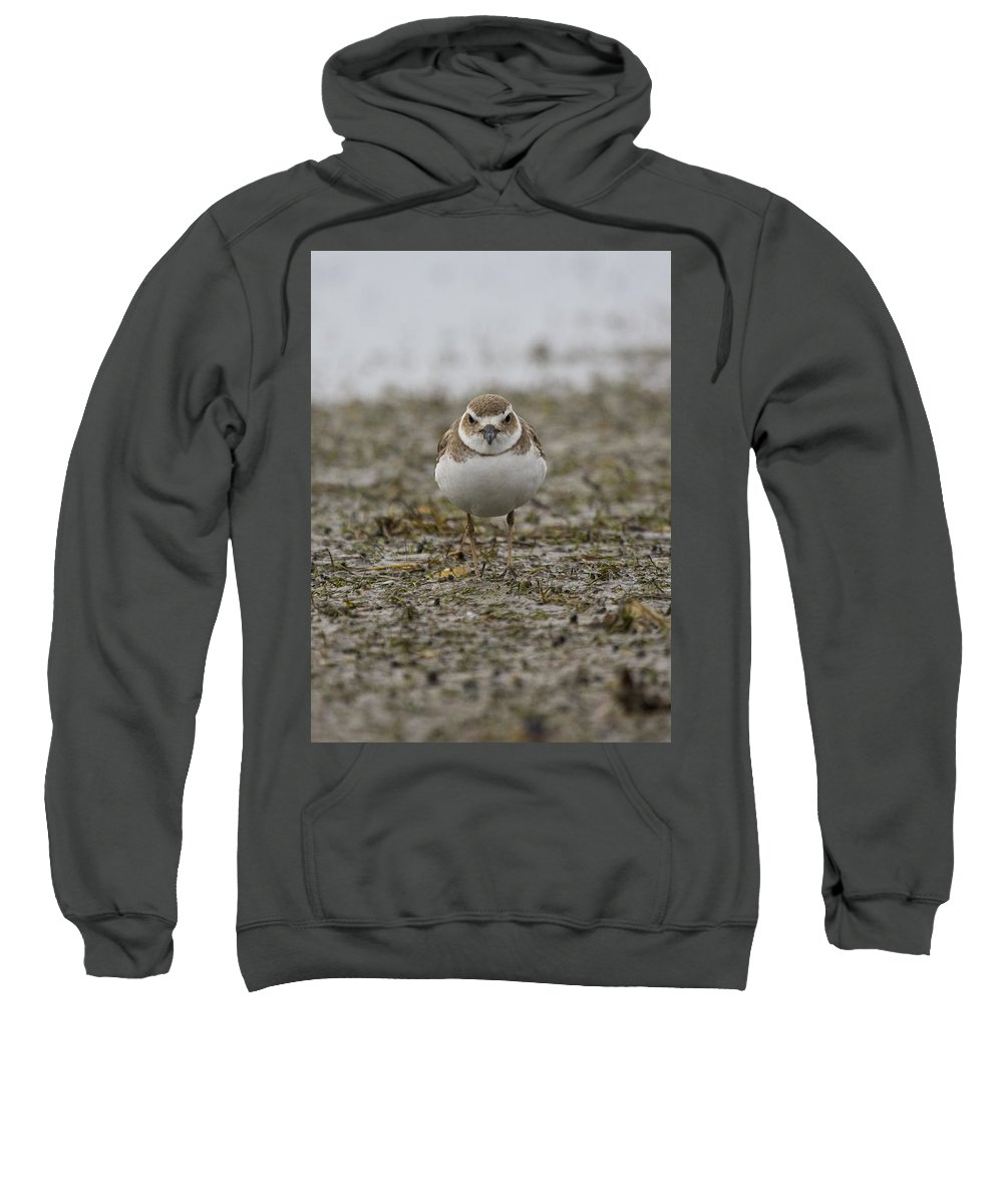 Plover Sweatshirt featuring the photograph Plover by Sandy Swanson