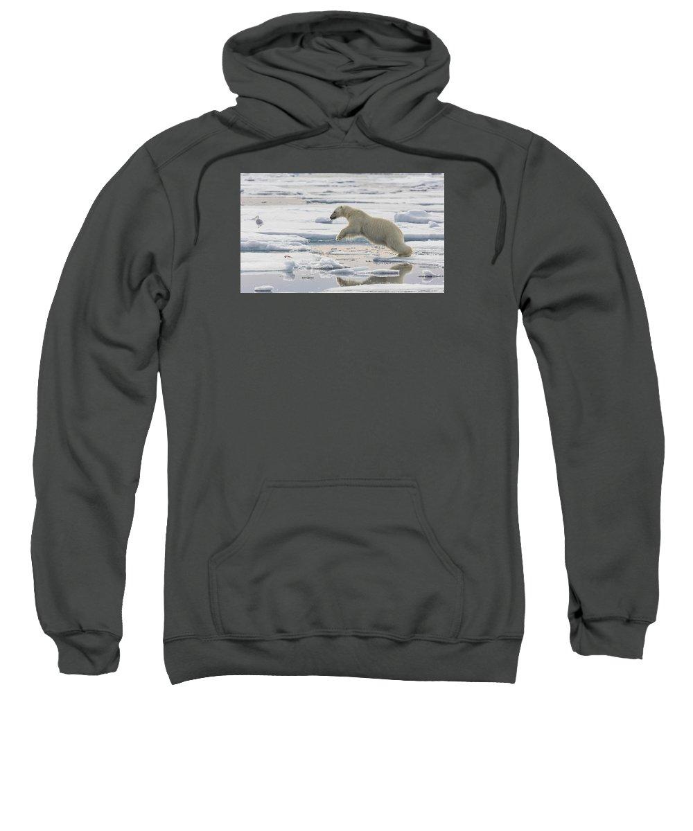 Nis Sweatshirt featuring the photograph Polar Bear Jumping by Peer von Wahl