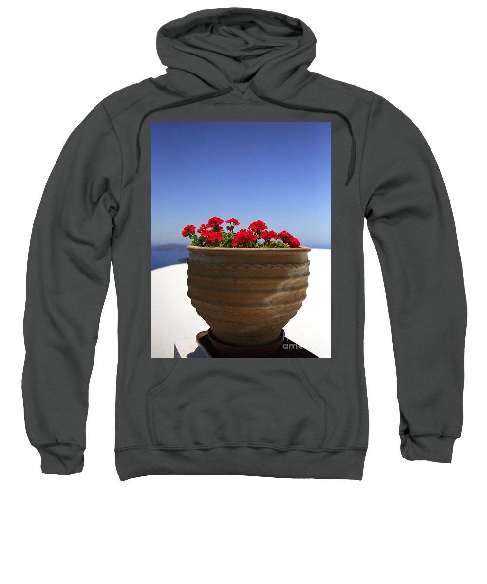 Bloom Sweatshirt featuring the photograph Potted Geranium by Deborah Benbrook