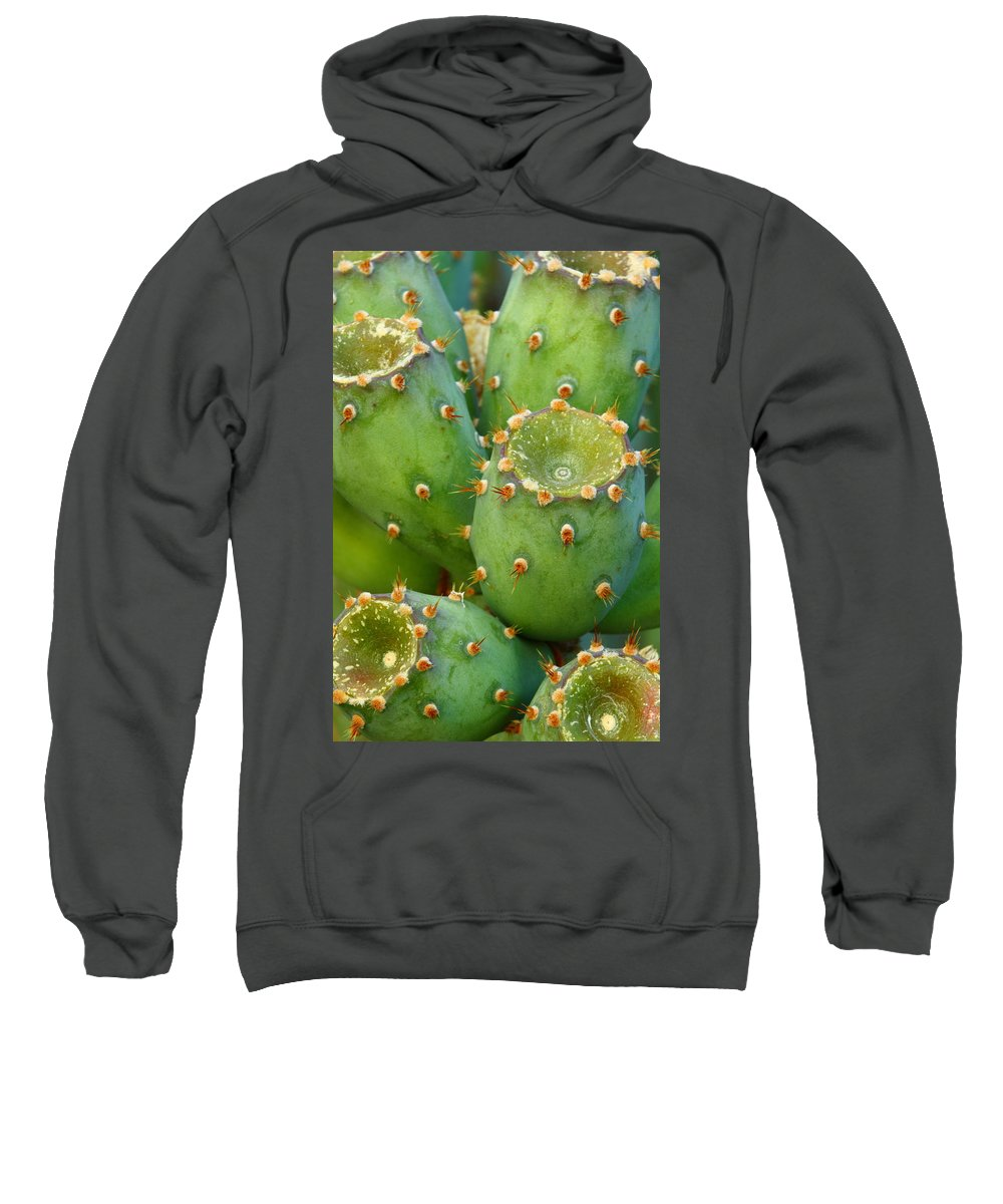 Cactus Sweatshirt featuring the photograph Prickly Pear Cactus 2am-105306 by Andrew McInnes