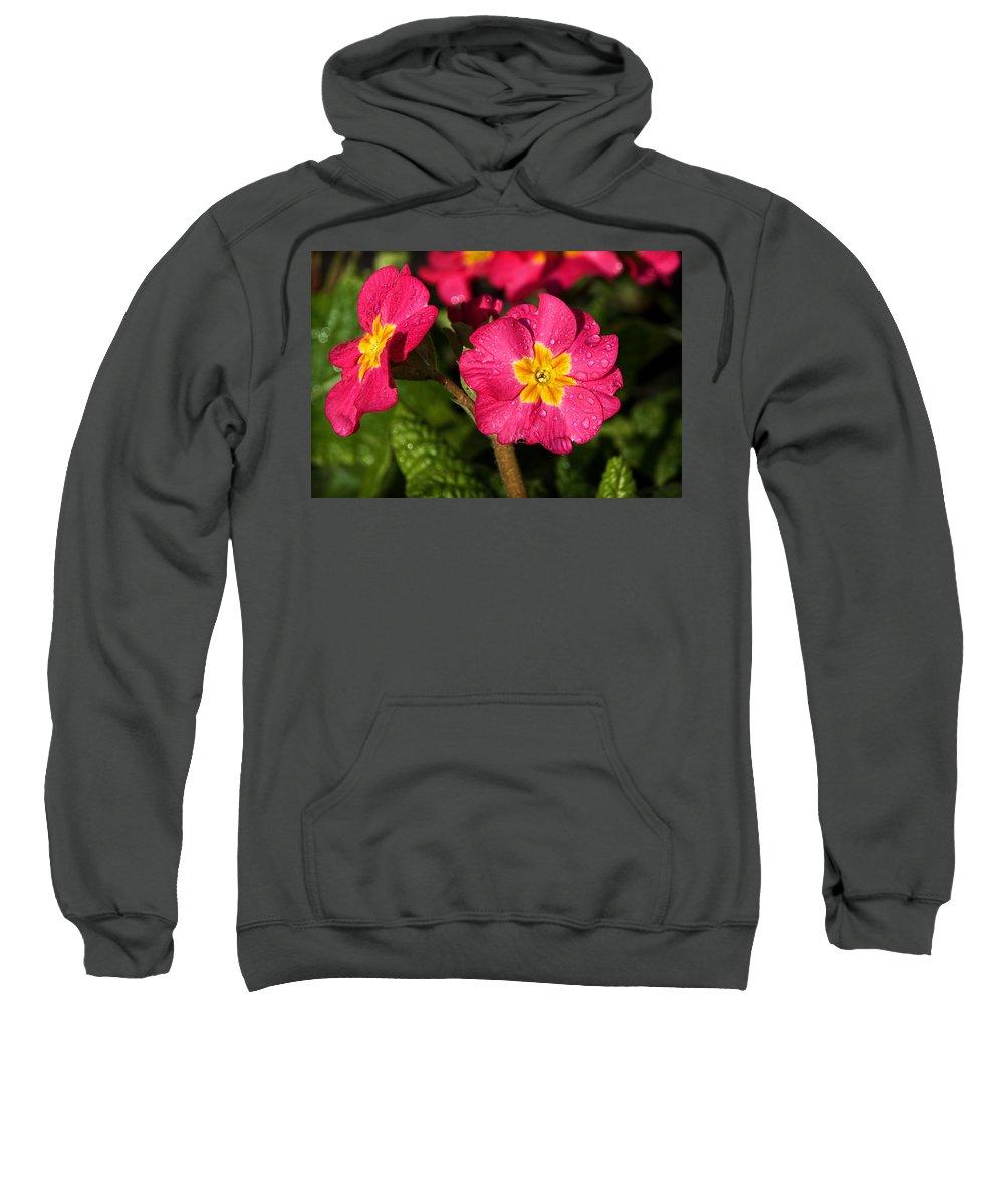 Primulas Sweatshirt featuring the photograph Primulas by Susie Peek