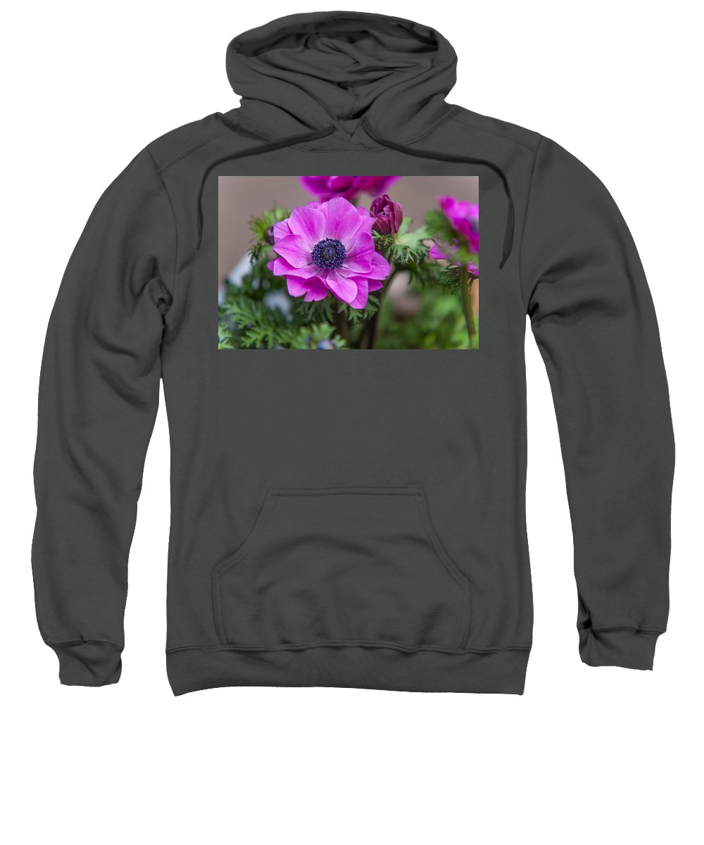 Flower Sweatshirt featuring the photograph Purple Anemone. Flowers Of Holland by Jenny Rainbow